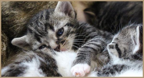 Kittens gevonden, wat nu?