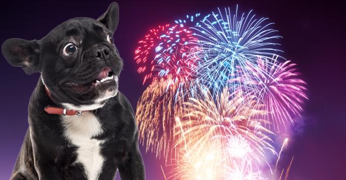 Hond met angst voor vuurwerk